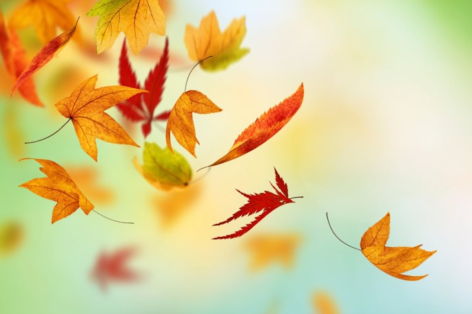 Autumn-Fall-Leaves-