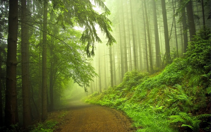forest-road-