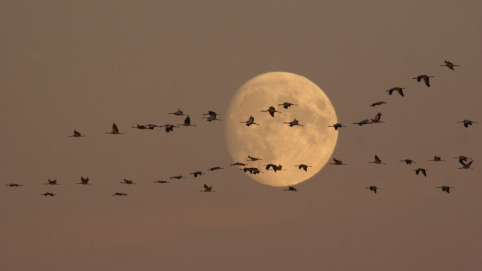 r_wild-geese-moon