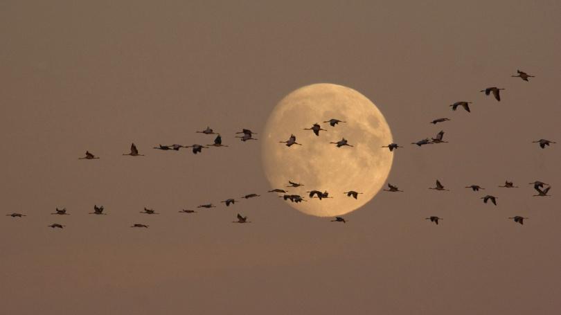 r_wild-geese-moon