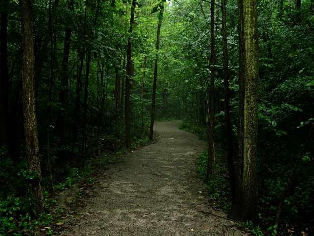 Dark Forest Path