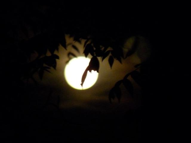 Full Moon w leaf