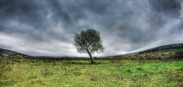 Hawthorn tree standing in field with dark sky