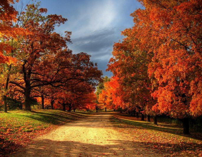 fall3.