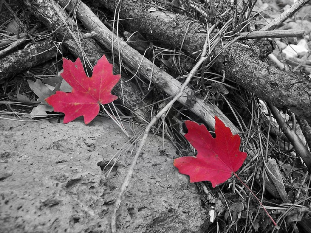 Twin-Fall-Leaves