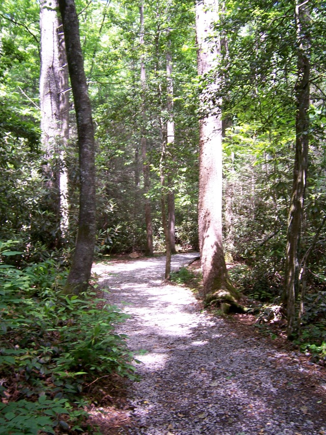 Forest Trail.jpg
