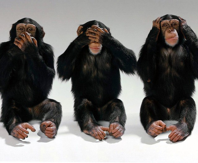 monkeys_featured